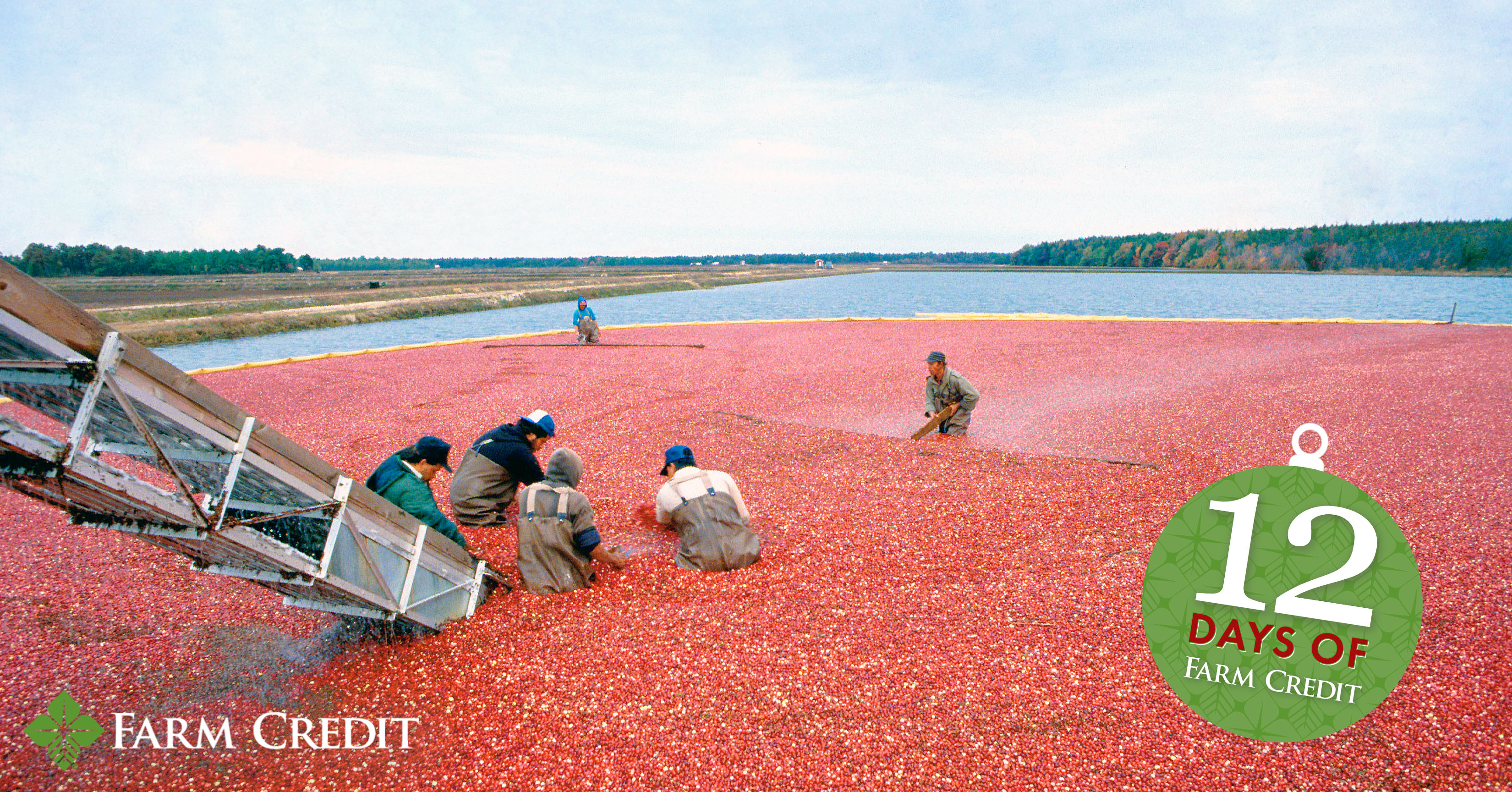 cranberries in water harvest 12 days of christmas graphic