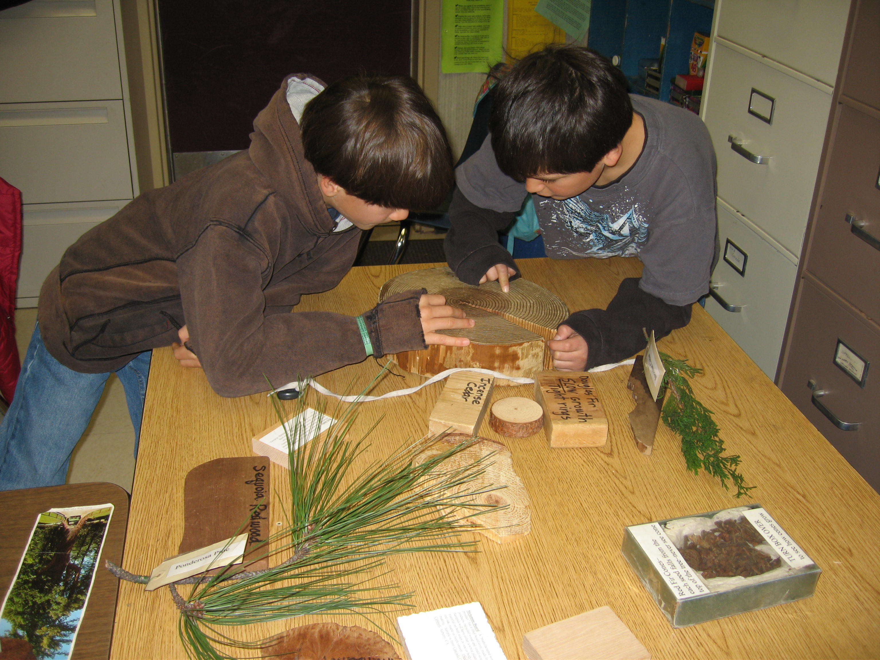 Two boys count tree rings during a Talk About Trees program at their school.