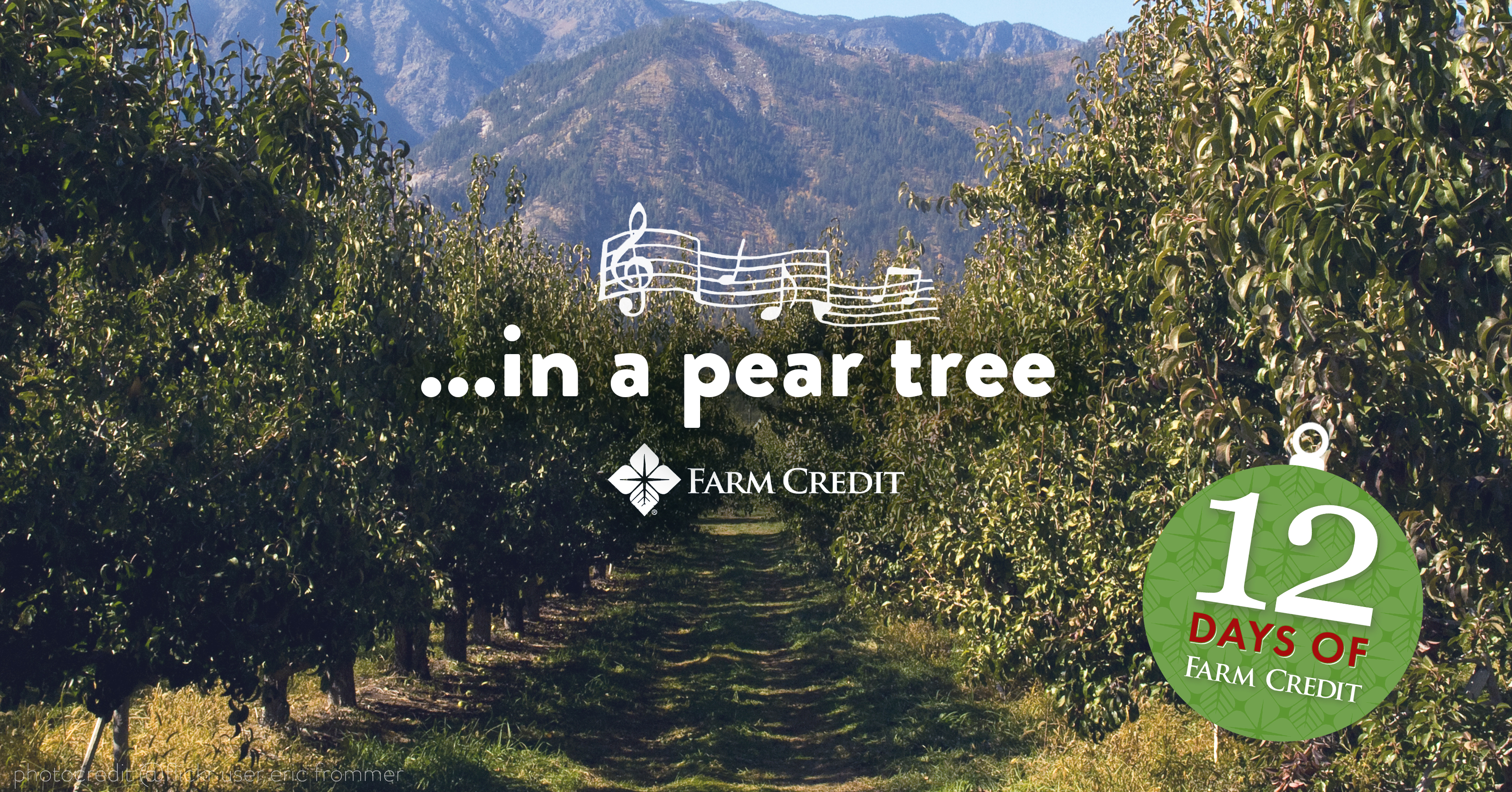 pear orchard with in a pear tree song written on screen